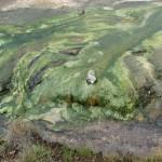 damp og jord der er nedbrudt af svovlsyre, og svovlaflejringer i Krísuvík. (1)